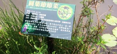 埤塘窩生態園-1